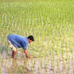 יום רביעי ללא אורז