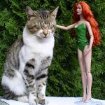 בחורה וחתול